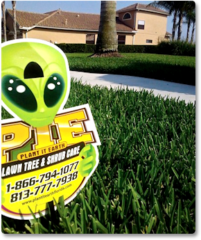 Lawn Care Amp Treatment Tampa Weed Amp Pest Control